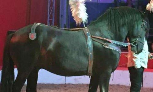 Pétition : Plus d'animaux dans les cirques