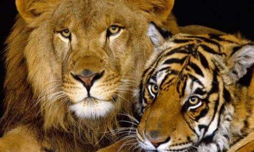 Non aux cirques avec animaux à Meximieux