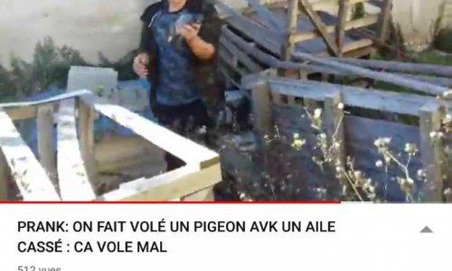 Pétition : Des jeunes s'amusent à maltraiter un pigeon avec une aile cassée tout en se filmant et postant leurs exploits sur YouTube
