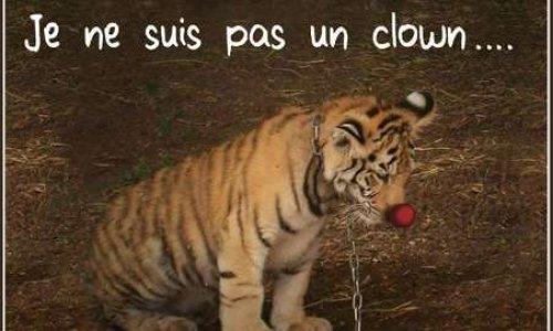 Pétition : Interdiction des cirques qui exploitent les animaux à la Roche sur Yon