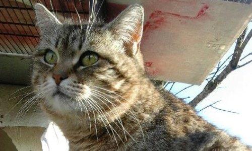 Justice pour PAPILLOTTE, chatte assassinée à Saint Quentin 02