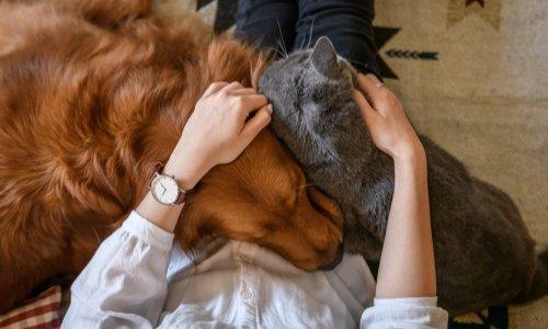 Pétition : Stop aux abandons de chiens et chats