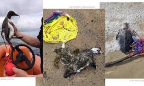 Pétition : Les lâchers de ballons tuent : renoncez-y pour la fête de Chaintréauville