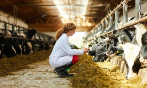 Pour le respect du bien-être animal dans les accords commerciaux de l'UE avec d'autres pays
