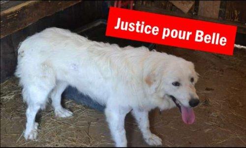 Pétition : Justice pour Belle, criblée de 50 balles de plomb