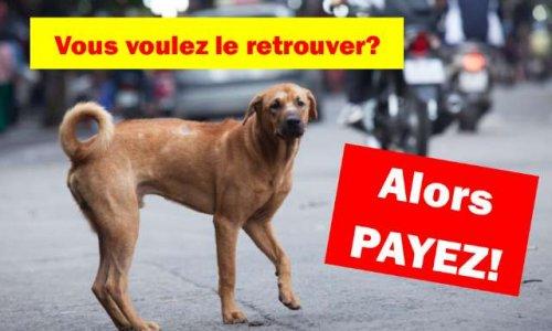 Pet Alert : Soit vous payez, soit vous ne retrouverez jamais votre animal.