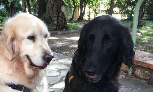 Un lieu de promenade libre pour les chiens à Juan les Pins.