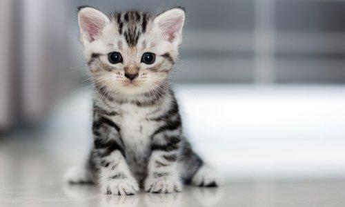 Justice pour le chaton de St-Louis noyé sous les yeux de sa propriétaire