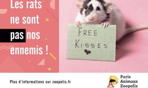 NON à la campagne de dératisation à Montpellier