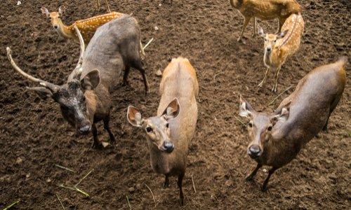 Pétition : STOP à la chasse en enclos ou safaris de campagne en France, STOP à ces crimes organisés !