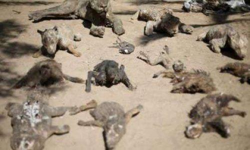 Faire fermer de nouveau le zoo de Gaza