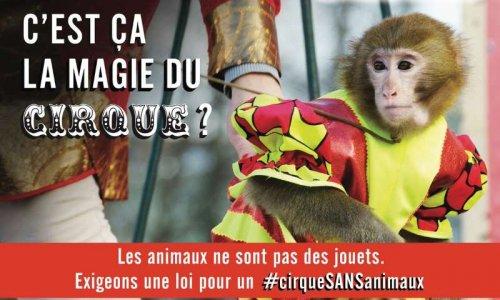 Pétition : Contre les cirques avec animaux à Troyes !