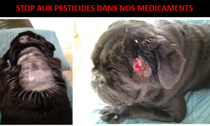 Antiparasitaires chimiques : STOP à l'intoxication de nos animaux !