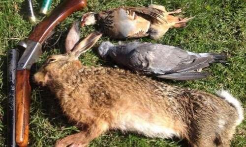 Pétition : Pour la démission du Président de la Société Protectrice des animaux qui se revendique ancien chasseur