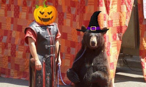 Non à l'exploitation de l'ours Valentin à la fête des sorcières de Chalindrey les 26 et 27 octobre 2019