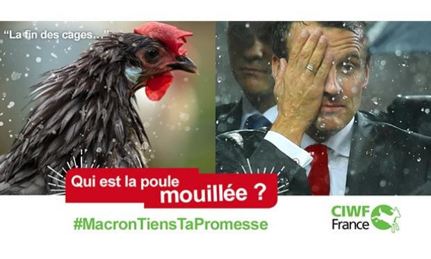 Pétition : M. Macron, tenez vos engagements à sortir les poules des cages !