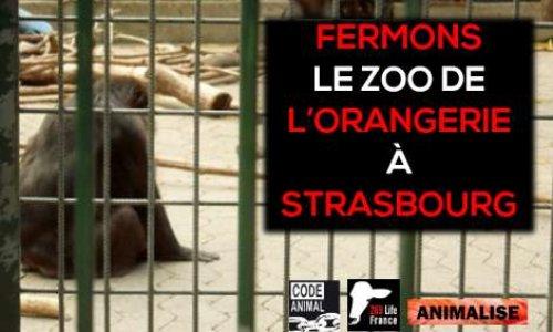 Pétition : Pour la Fermeture du Zoo de l'Orangerie à Strasbourg