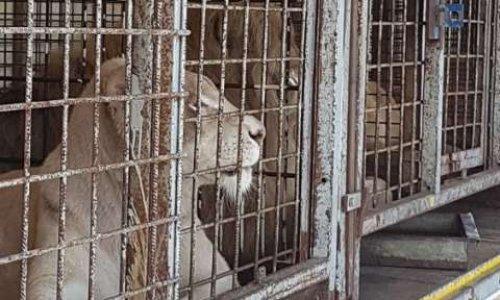 Pétition : Martigues ne doit plus accepter les Cirques avec les Animaux