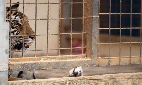 STOP aux Cirques AVEC animaux dans le Lot et Garonne
