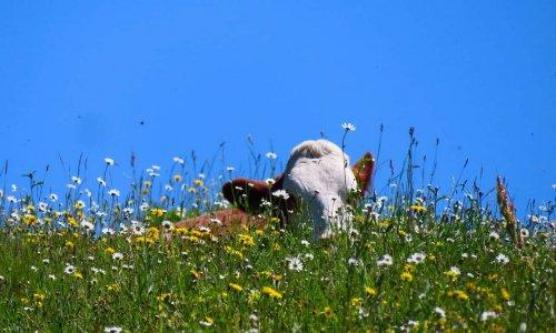 Pétition : Plantes en élevage : soutenons les 1052 éleveurs et éleveuses hors la loi