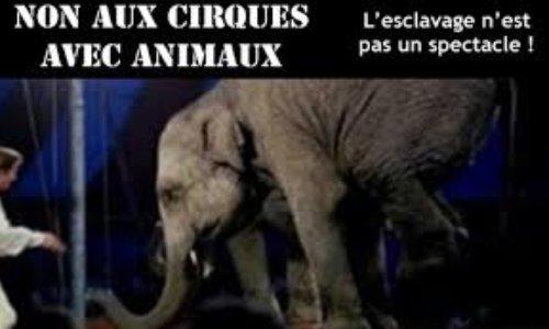 Boycottons le cirque Zavatta aux Herbiers !