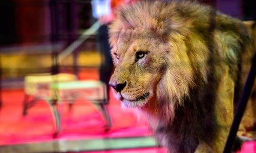 Non aux cirques avec des animaux à Crémieu
