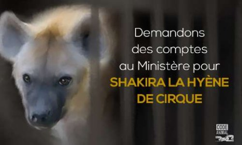 Pétition : Pour Shakira la Hyène de Cirque : Demandons des Comptes au Ministère de l'Ecologie !