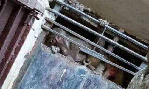 METTRE FIN AUX CONDITIONS DE VIE INTOLÉRABLES DES ANIMAUX DU ZOO DU BELVEDERE A TUNIS