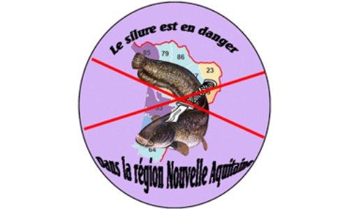 Pétition : Non à l'éradication du silure dans la Région Nouvelle-Aquitaine, non au carnage !