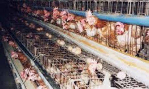 Améliorons le traitement des animaux d'élevages dans les fermes du Québec