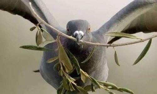 NON au massacre des Pigeons à Bordes-sur-Arize (09)