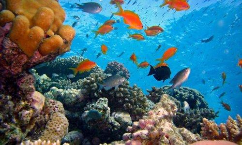 Pétition : 6 mois pour offrir une chance aux poissons avec des aires maritimes intégralement protégées