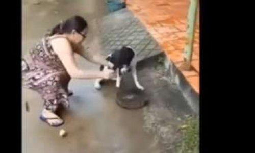 Pétition : Sanction envers la personne ayant coupé la patte de son chien à la hache