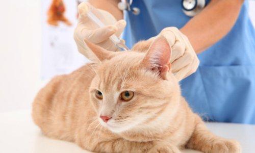 Pétition : Diviser par 3 le coût vétérinaire des animaux de compagnie