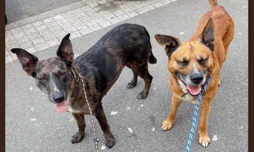 Pétition : Voici les 2 chiens tueurs de chats sur Nantes.