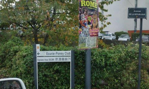 Pétition : Stop aux animaux dans le cirque de Rome