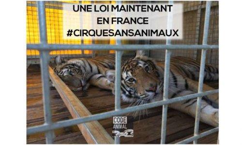 Pétition : Députés la République en Marche : nous voulons des cirques sans animaux !