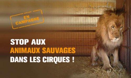 Pétition : Pas de cirques avec animaux à Troyes