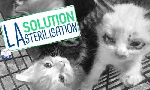 Demande de campagne de stérilisation des chats à Wattrelos
