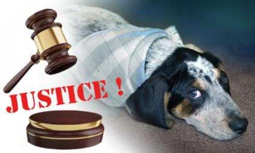 Une vraie justice pour les animaux