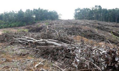 Pour l'effacement de l'huile de palme de la liste des biocarburants