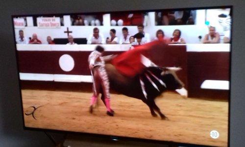 Interdiction de diffusions de corridas à la Télévision !