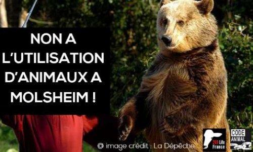 Pétition : NON à la présentation d'ours, loups et rapaces par Jean-Philippe Roman à l'événement