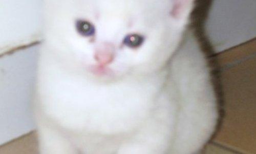 Pétition : Pour que maman accepte de ramener un chaton à la maison