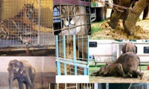 Plus d'animaux chez Medrano !!!