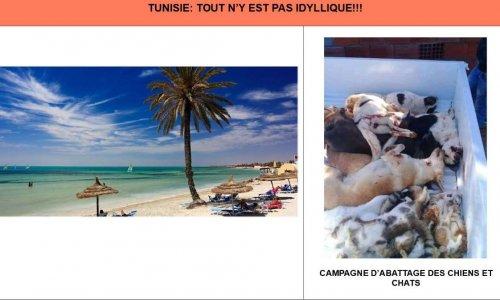 ARRÊTEZ LE MASSACRE DES CHIENS DES RUES EN TUNISIE !