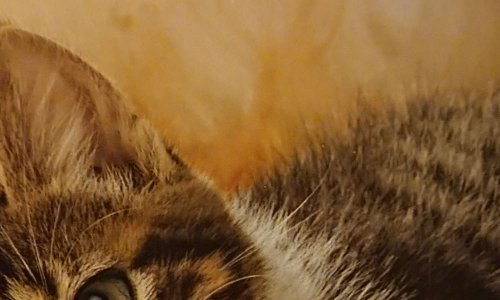 Pétition : Petition pour dire stop à la maltraitance des aminaux chiens et chats et  autres