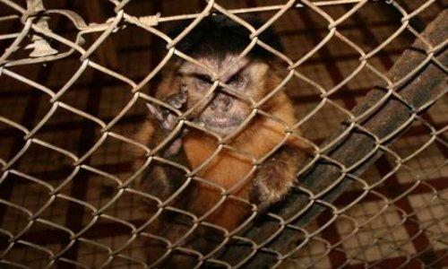 STOP à l'expérimentation animale à l'Université de Strasbourg et arrêt du commerce de singes