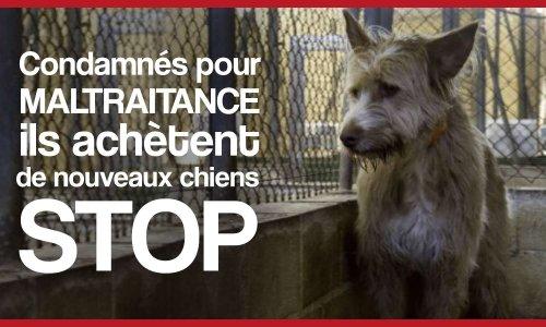Pétition : Condamnés pour maltraitance, ils achètent de nouveaux chiens : STOP