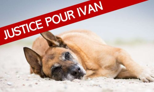 Pétition : Cadavre d'un chien momifié retrouvé chez un policier : justice pour Ivan